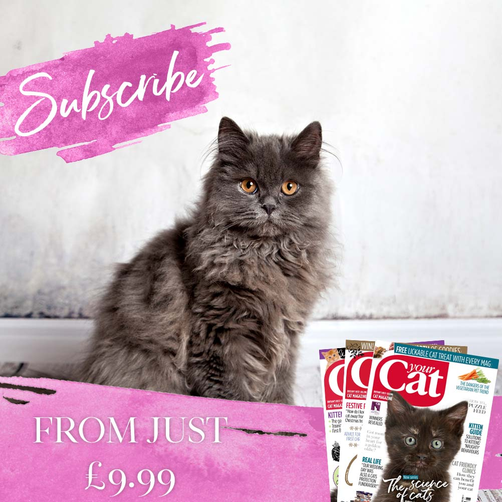 Your Cat Magazine