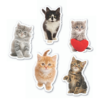 Free Gift: Your Cat Pin Badge