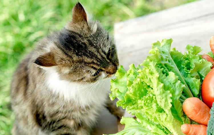 Can I Feed My Cat A Vegan Diet Your Cat