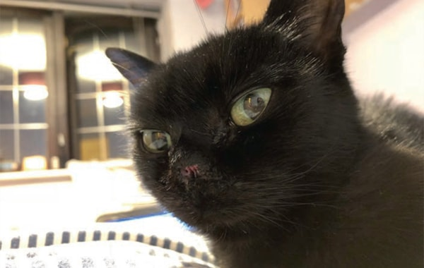 cancer-caused-cat-to-have-nose-removed