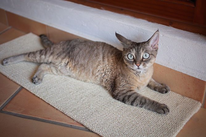 Why does my cat scratch the carpet?