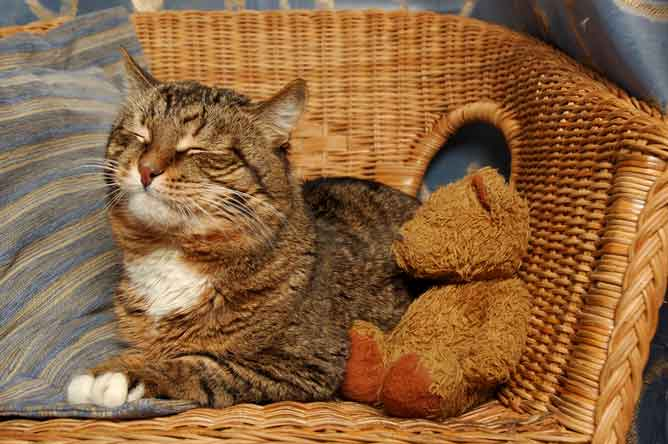 Caring for a cat with arthritis