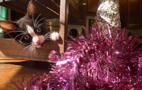 What will happen if my cats eats tinsel?