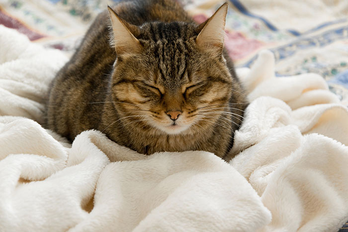 Will My Cat Get Too Cold In The Winter Your Cat