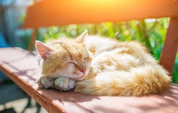 create-a-cat-friendly-garden