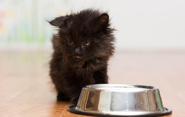feeding a kitten