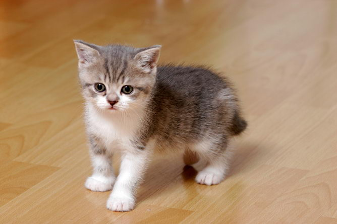 What To Do When A Cat Has Kittens At Home