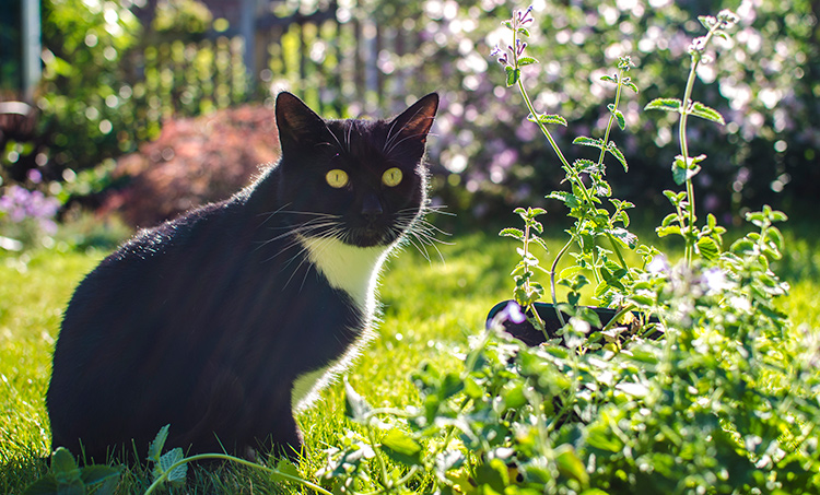 Where To Buy Catnip Seeds Fundamentals Explained