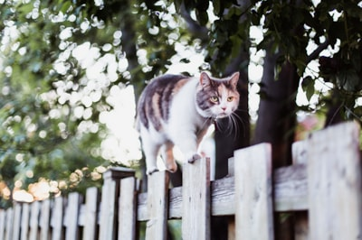 how-can-i-stop-other-cats-visiting-my-garden