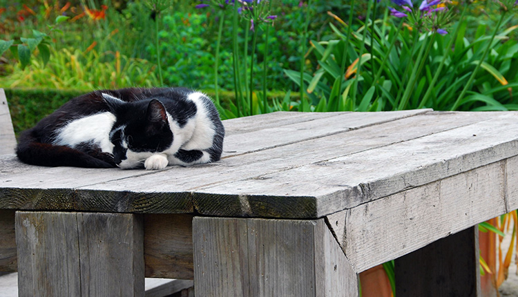 howto stop other cats coming in your garden