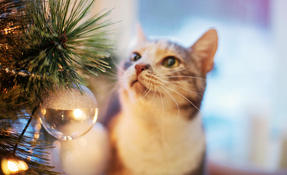How do I keep my cat away from the Christmas tree?