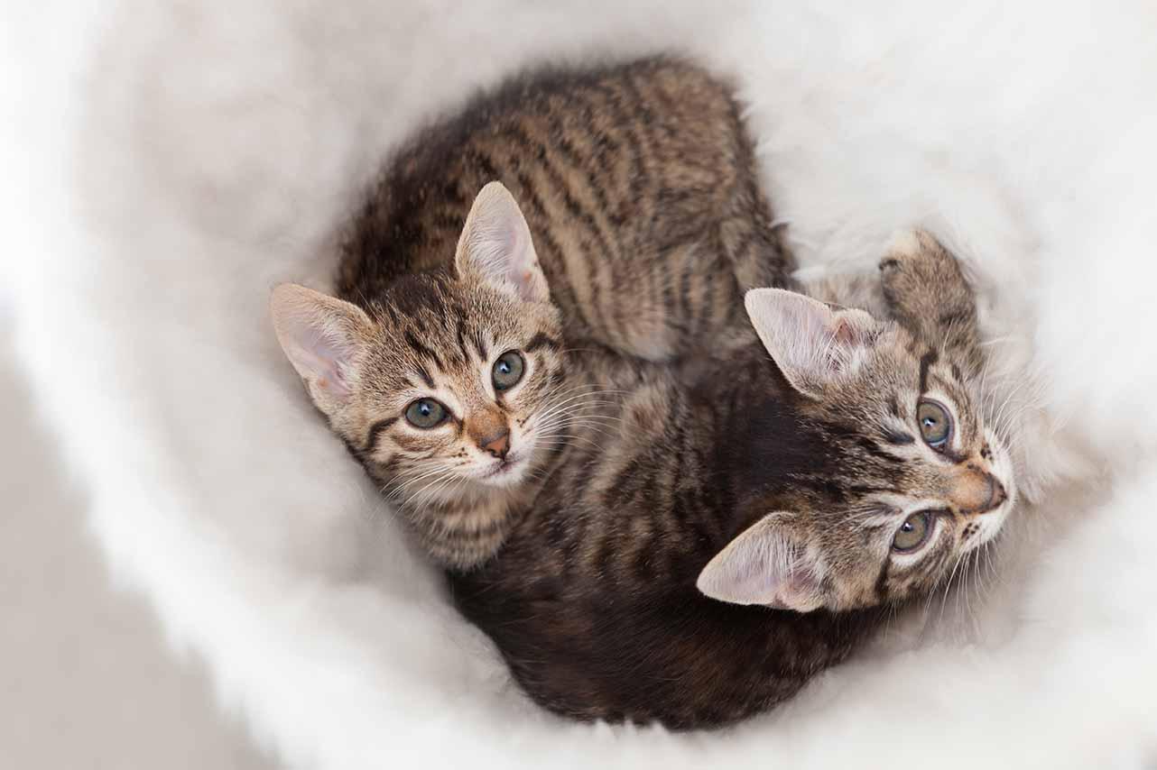 How to socialise your kitten