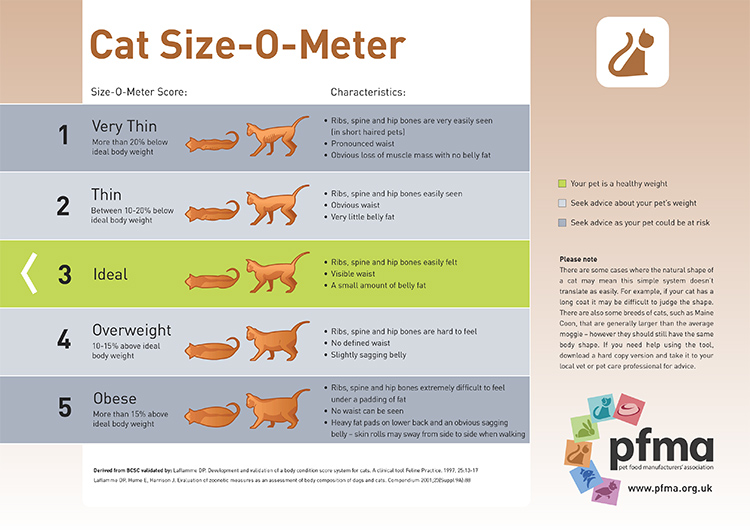 is-my-cat-a-healthy-size
