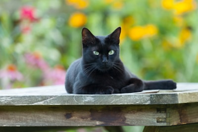 making-your-garden-as-cat-friendly-as-possible