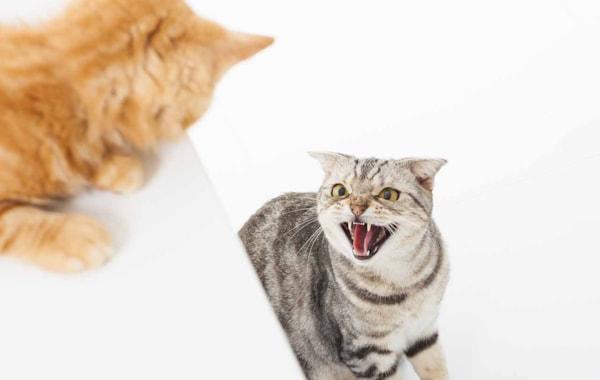 My cat won't accept a new kitten