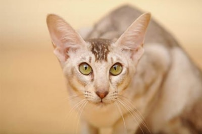 How Long do Cats Live and the Different Types of Cats