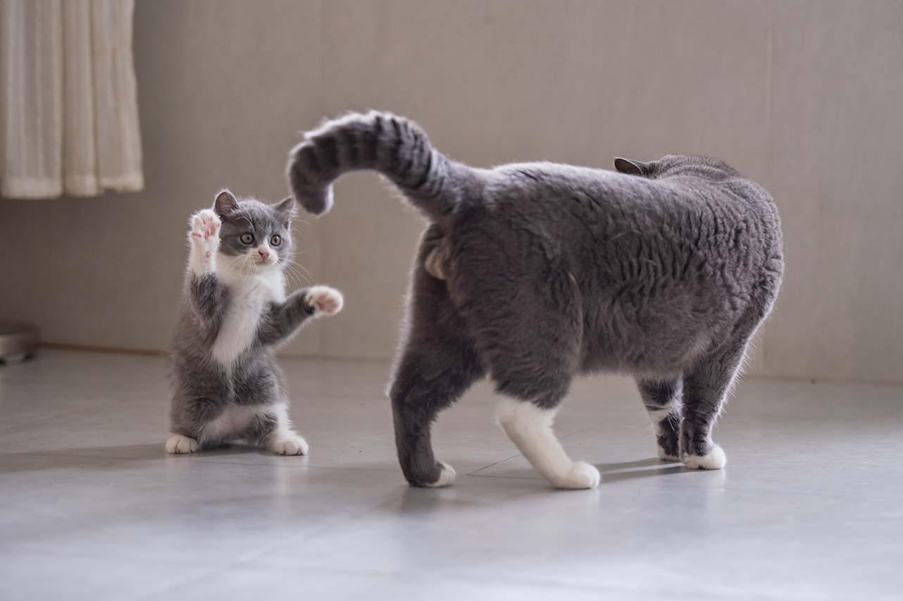 Cat aggression
