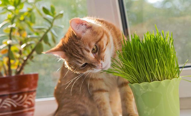 what-is-catnip
