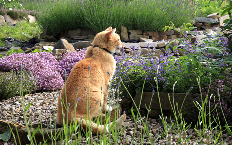 what-plants-will-my-cat-enjoy