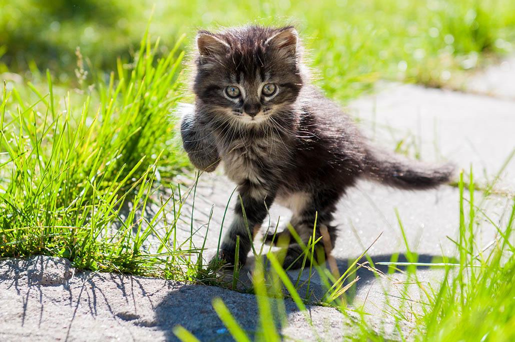 When can my kitten go outside?