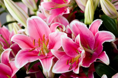 which-lillies-are-toxic-to-cats