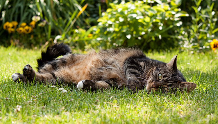 which plants are toxic to cats. Black Bedroom Furniture Sets. Home Design Ideas