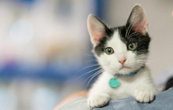 Should I neuter my kitten?