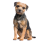 Terrier dog breed profiles