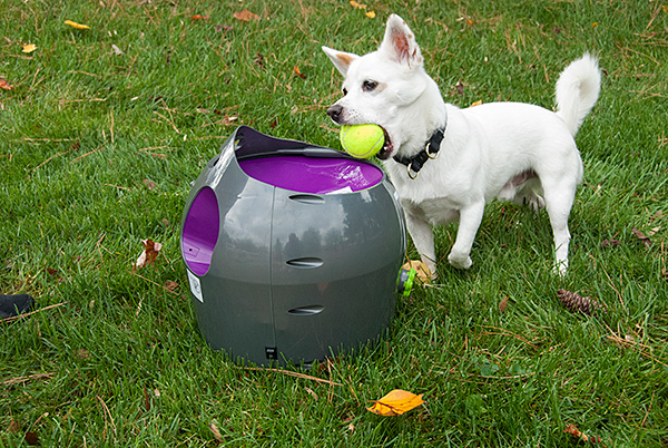 Win a PetSafe Automatic Ball Launcher!