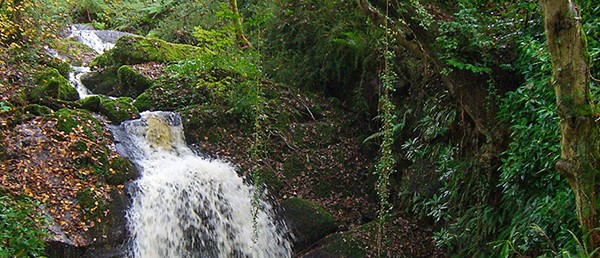 111_woodland-waterfall