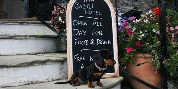 154_the-castle-hotel-viscious-guard-dog-millie
