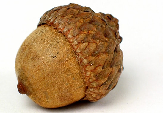 Are Nuts Poisonous To Dogs Uk