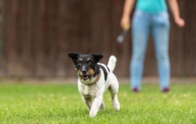 Canine adolescence