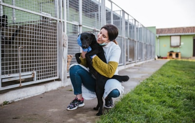 How to adopt a rescue dog