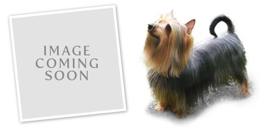 Australian Silky Terrier dog breed profile