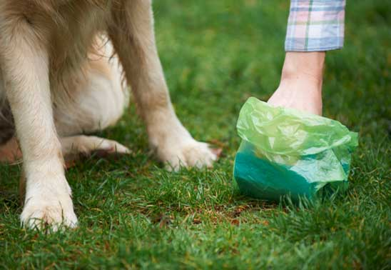 What should I do with my dog's poo?