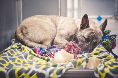 Criteria for dog adoption