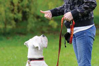 Can I Train My Deaf Dog
