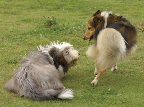 how to stop dog barking at other dogs when walking