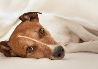 Can dogs catch colds?