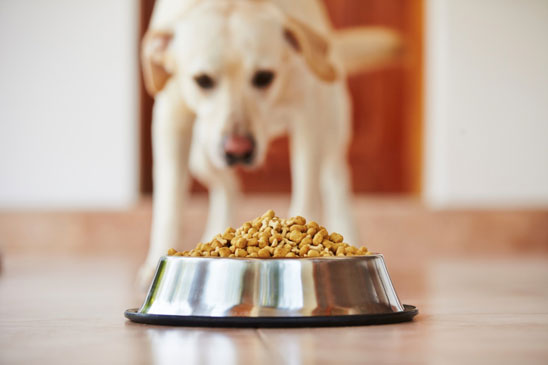 Image result for dog eating from bowl