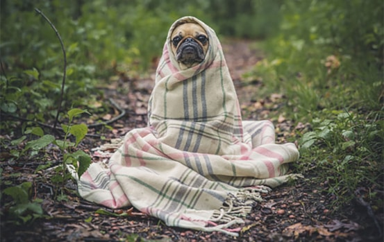 Keeping your dog away from everyday hazards at home
