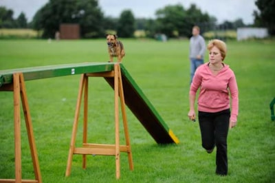 How to get starting in dog agility
