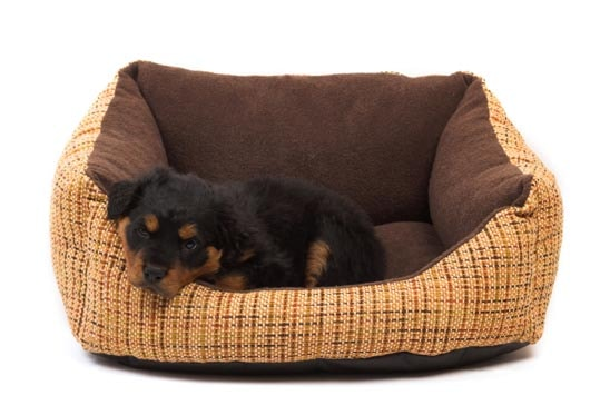 what type of bed should i buy for my new puppy. Black Bedroom Furniture Sets. Home Design Ideas