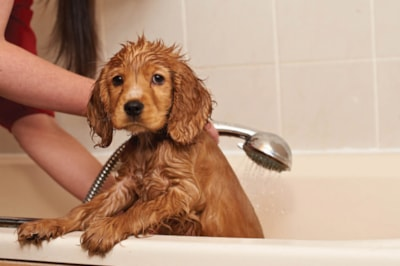 Puppy hates bathtime