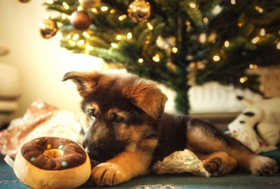 Christmas safety tips for your puppy