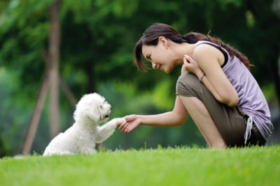 The benefits of trick training your dog