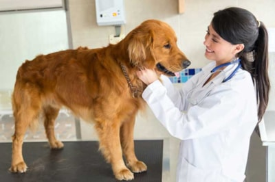 Choosing the right vet for your dog
