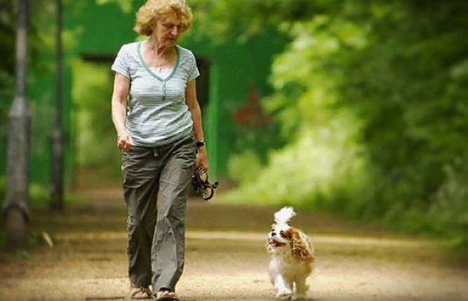Walking Your New Dog