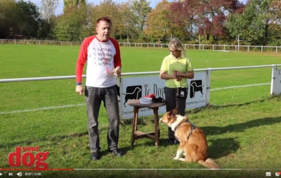 Teach your dog the whistle recall